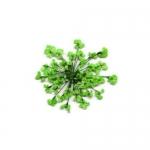Сухоцветы в пакете Салютики зеленые (4037)