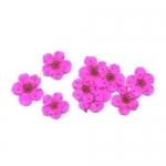 Сухоцветы в пакете Пятилистник розовый (4048)
